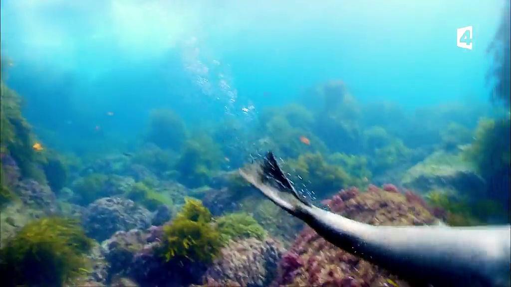 Documentaire Mission monstres marins – Plongée avec le grand requin blanc