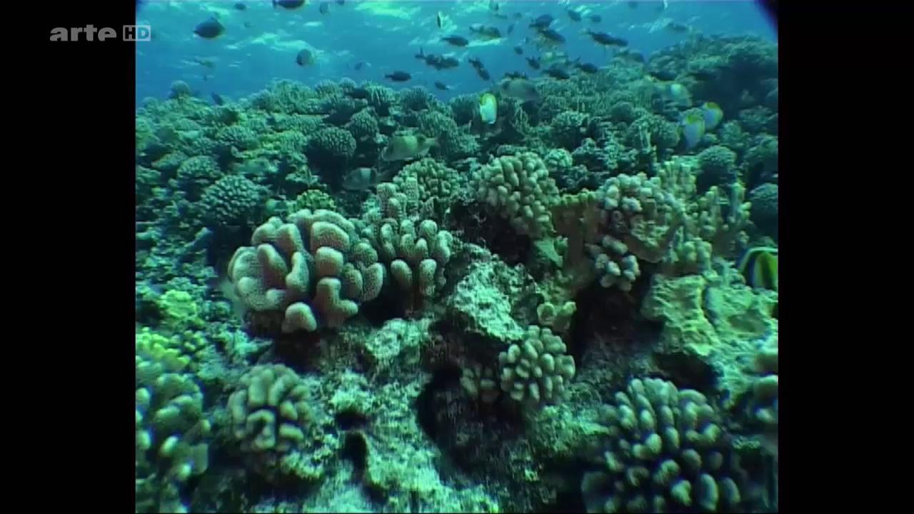 Documentaire Polynésie, un avenir irradié