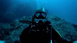 Documentaire Une plongée à Cocos, l'île aux requins