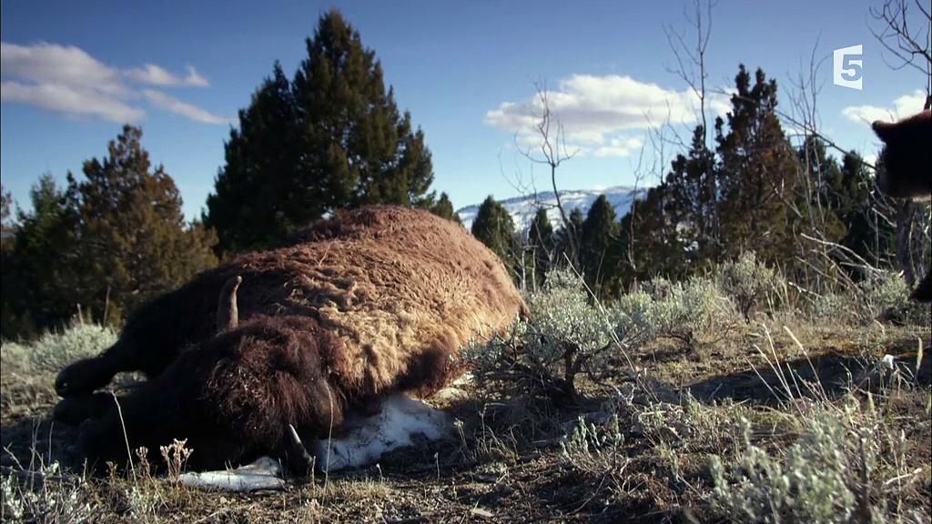 Documentaire Far West sauvage – Les montagnes sans loi