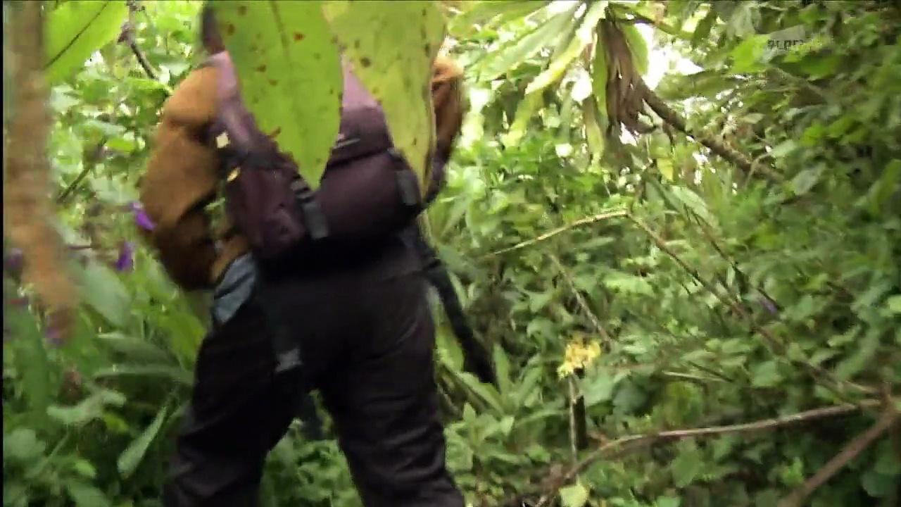 Documentaire Les derniers gorilles de montagnes E02