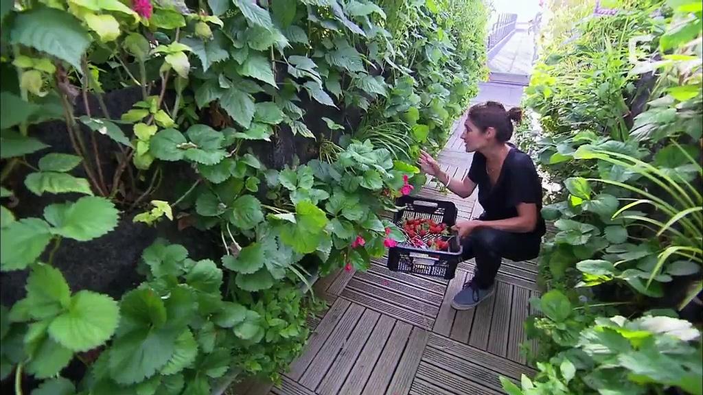 Documentaire Toits de Paris, des jardins extraordinaires