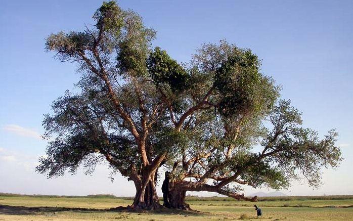 Documentaire Histoires d'arbres – Les sacrés (4/6)