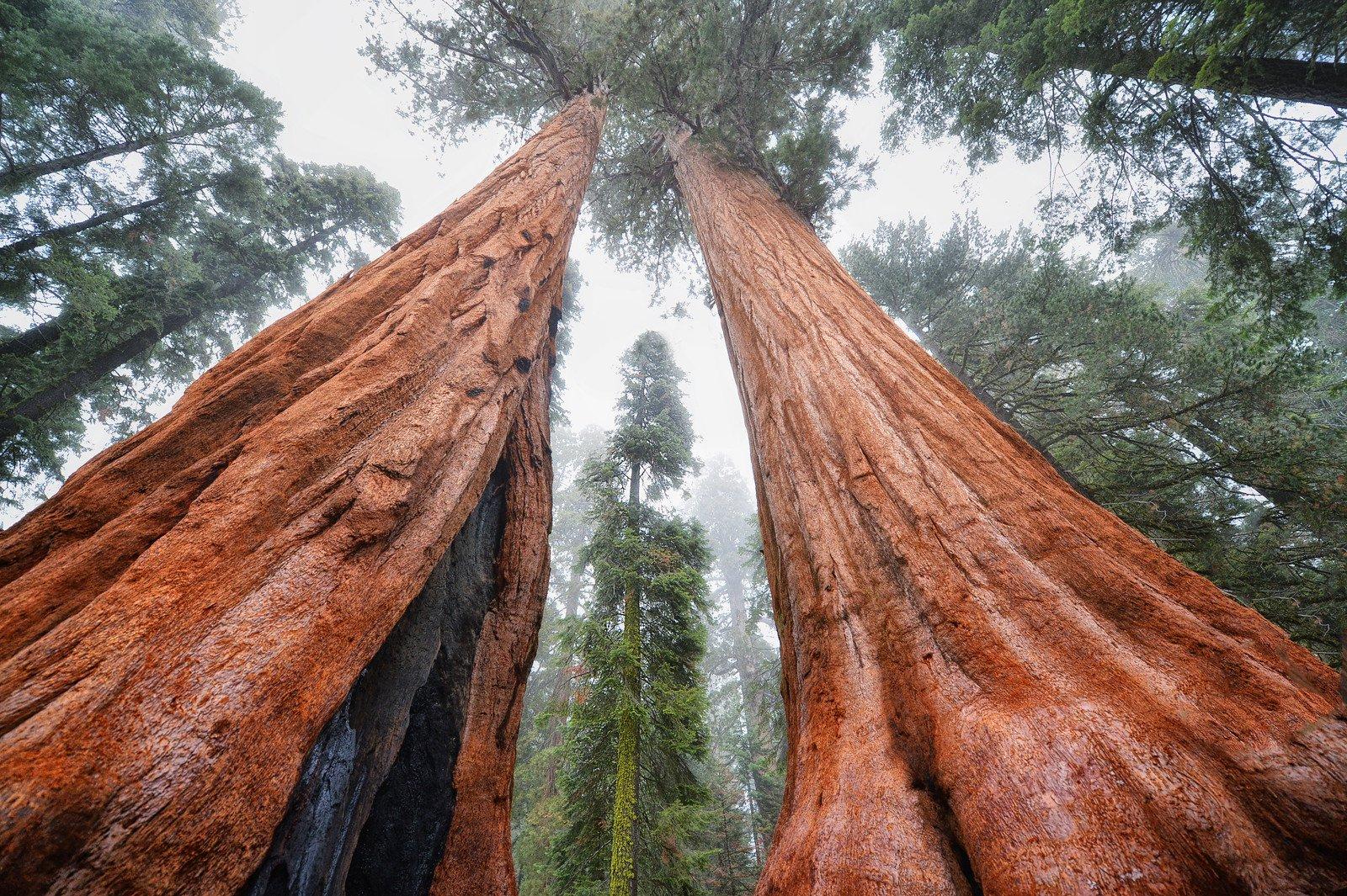 Documentaire Histoires d'arbres – Les survivants (5/6)