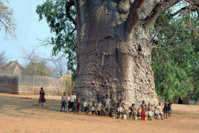Documentaire Histoires d'arbres : les vénérables (2/6)