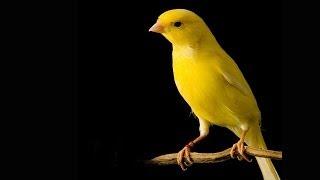 Documentaire Des canaris dans la mine