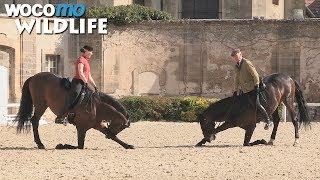 Documentaire Chantilly : les plus belles écuries du monde