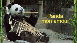 Documentaire Panda, mon amour