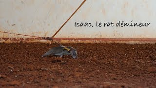 Documentaire Isaac, le rat démineur