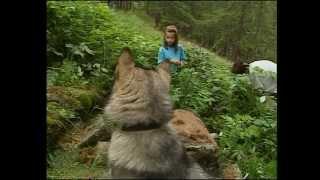 Documentaire Les animaux de la montagne