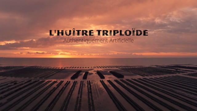 Documentaire L'huître triploïde, authentiquement artificielle