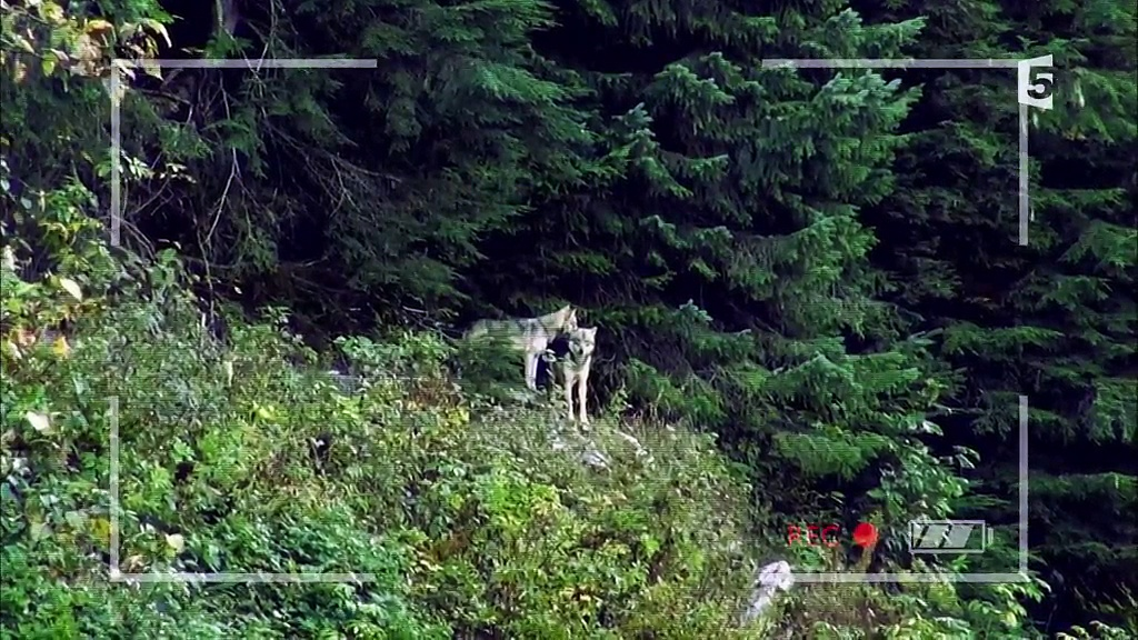 Documentaire Anchorage, ville sauvage –  Entre chiens et loups