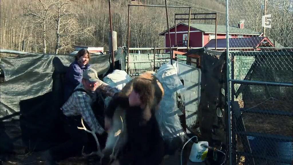 Documentaire Anchorage, ville sauvage – Les derniers caribous