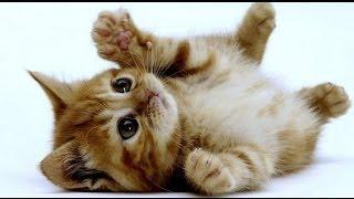 Documentaire Le chaton