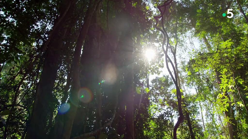 Documentaire Caméra à la patte – Suricates, chimpanzés et manchots