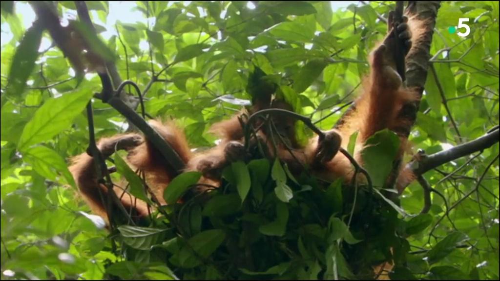 Documentaire Les miracles de la mousson – La nature en suspens