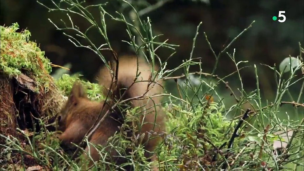 Documentaire Les quatre saisons du Loch Lomond – Hiver