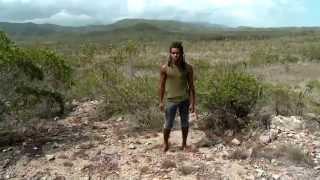 Documentaire Bulimes, les escargots de Nouvelle-Calédonie