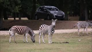 Documentaire Thoiry : un zoo pas comme les autres