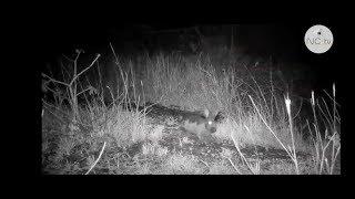 Documentaire Le lapin, une espèce envahissante