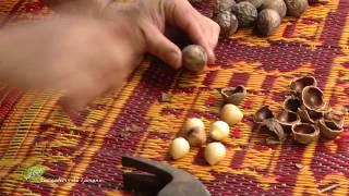 Documentaire Les secrets du tamanou
