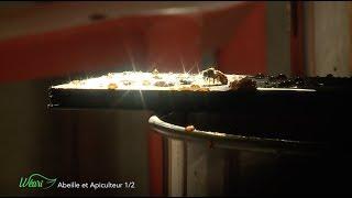 Documentaire Abeille et apiculteur (1/2)