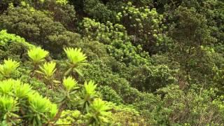 Documentaire Le sentier botanique de Tiébaghi