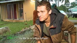 Documentaire La fête de la forêt à Gohapin