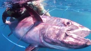 Documentaire Chasse sous marine en Polynésie