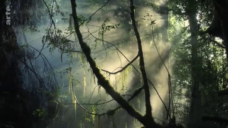 Documentaire Etrange Tasmanie