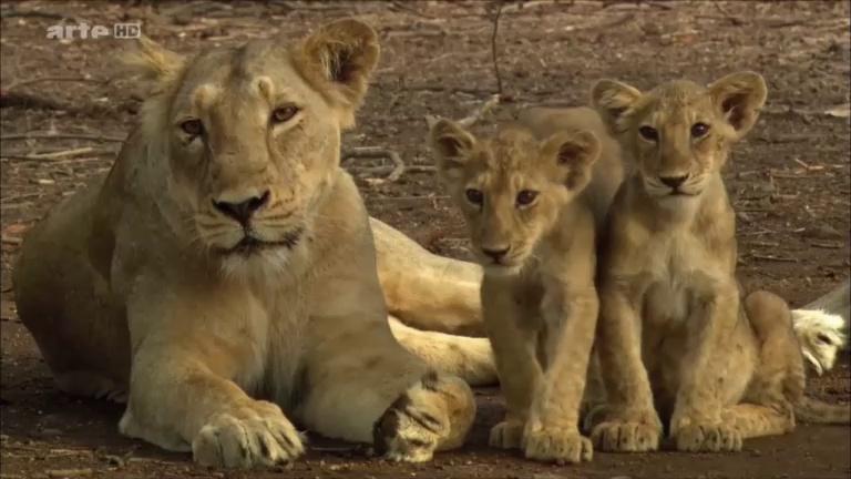Documentaire La fabuleuse histoire de l'évolution – Ep03 – Inde, les Gaths occidentaux