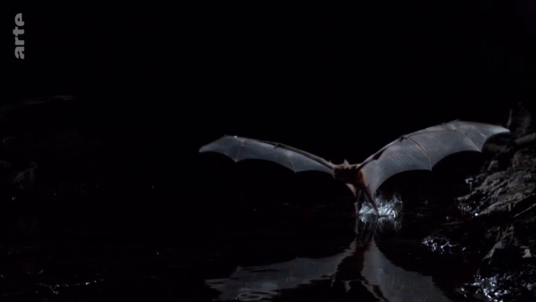 Documentaire La fabuleuse histoire de l'évolution – Ep04 – Le Costa Rica