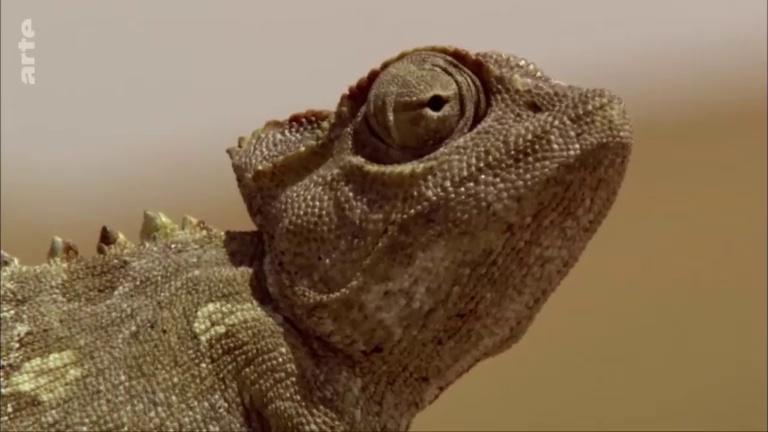 Documentaire La fabuleuse histoire de l'évolution – Ep05 – Le désert du Namib