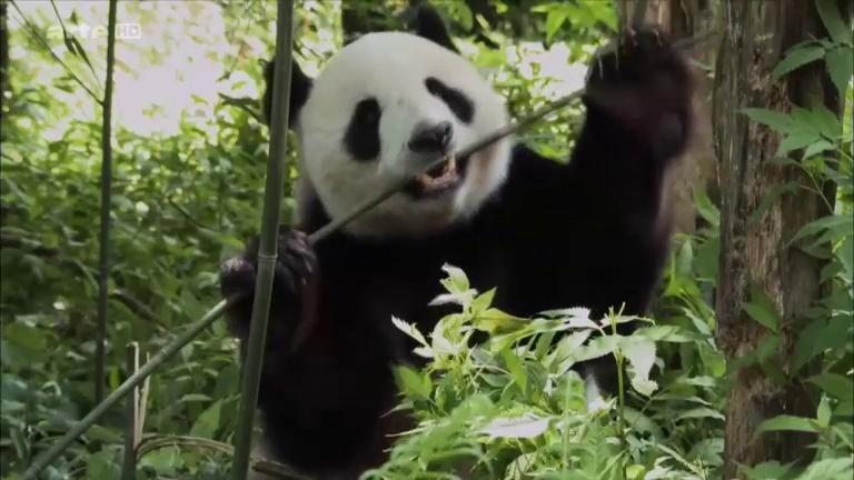 Documentaire La fabuleuse histoire de l'évolution – Ep06 – Chine, le toit du monde