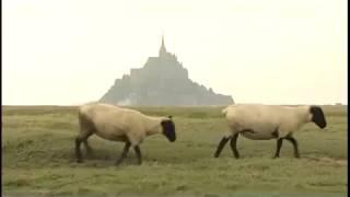 Documentaire Le Mont Saint-Michel, la baie nourricière