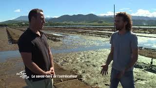 Documentaire Entre terre et mer – Le savoir-faire de l'ostréiculteur