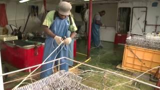 Documentaire Entre terre et mer – La pêche aux thons (1/2)