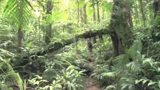 Documentaire 21è siècle – Les Guarani du Brésil, un peuple à la recherche de son identité perdue