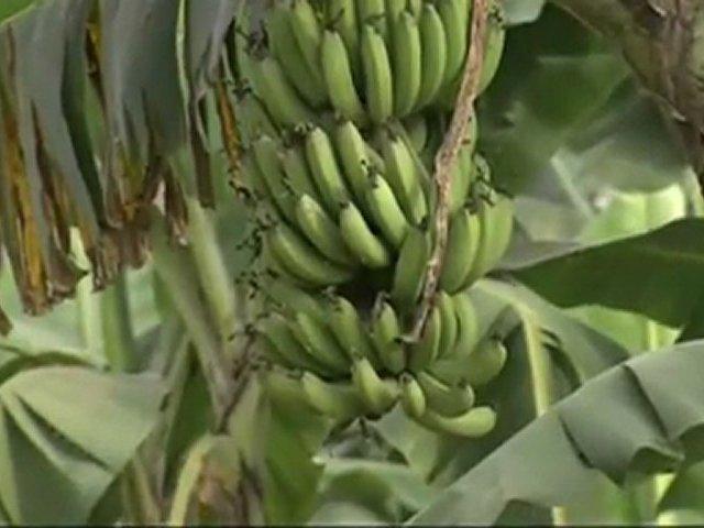 Documentaire Au pays des rizières suspendues