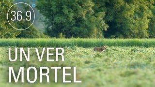 Documentaire Echinocoque: le parasite est dans le pré