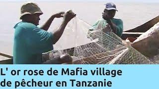 Documentaire L'or rose de Mafia, village de pêcheur en Tanzanie