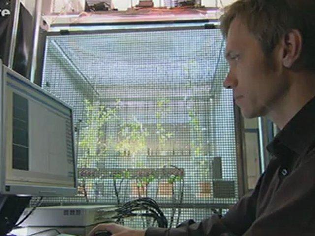 Documentaire La force cachée des plantes – 2/2 – Championnes de la com