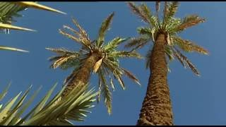 Documentaire Maroc, grande Bleue, grand désert
