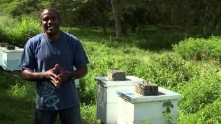 Documentaire Les coulisses de la Science – Le monde des abeilles