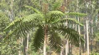 Documentaire Les coulisses de la science – Amborella, la reine mère des plantes