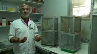 Documentaire Les coulisses de la science – La dengue (1/2)