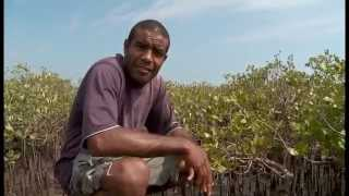 Documentaire Les coulisses de la science – La mangrove