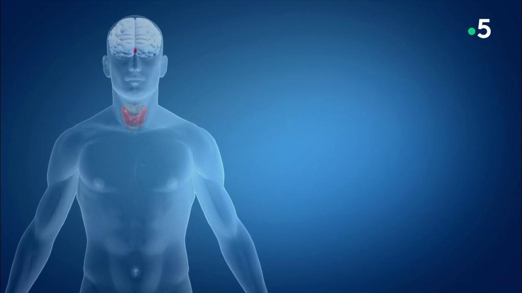 Documentaire Thyroïde, l'effet papillon