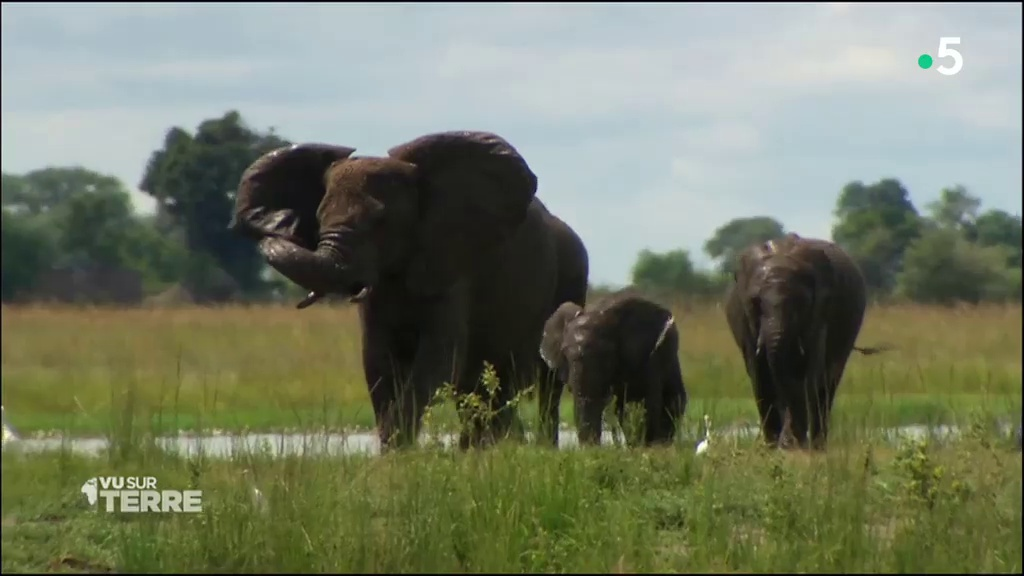 Documentaire Vu sur Terre – Botswana