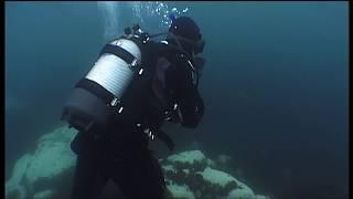 Documentaire Léopards de mer, le seigneur des glaces